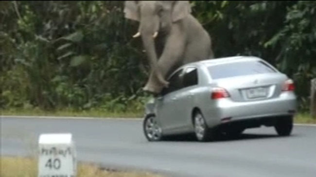 elefante-tailandia